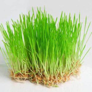 пшенични-стръкове-детокс